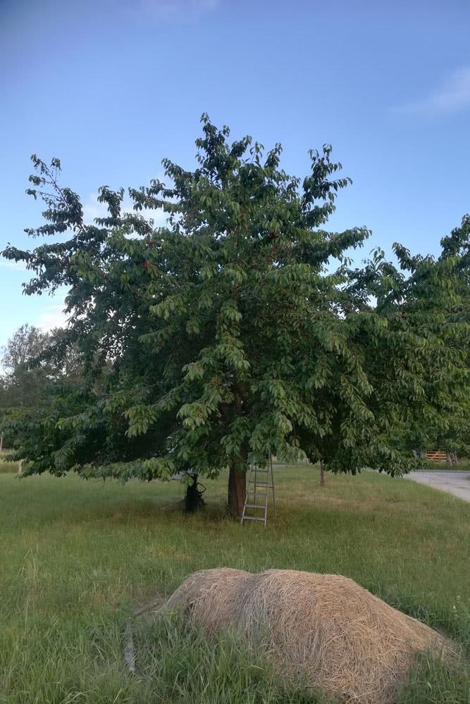 Obstbaumwiese-2.jpg